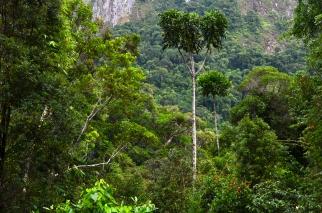 Regenwaldterrarium